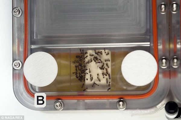 800只蚂蚁抵达国际空间站