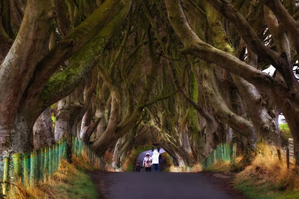 """爱尔兰""""恐怖的童话森林"""""""