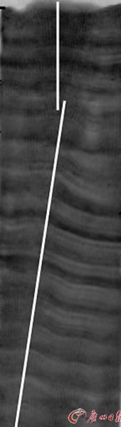 将滨珊瑚样本沿中心切成8毫米的珊瑚薄片后,用X光照相,从X光照片上可以看到清晰的珊瑚年生长条纹(类似于树轮,14毫米/年)(照片提供人:中国科学技术大学刘羿博士