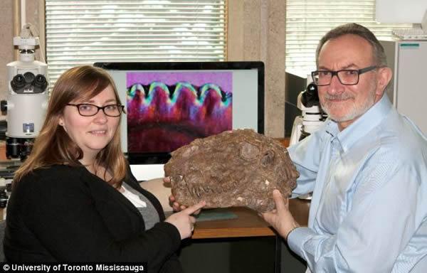 陆地上第一批捕食者可能长有牛排刀一样的牙齿