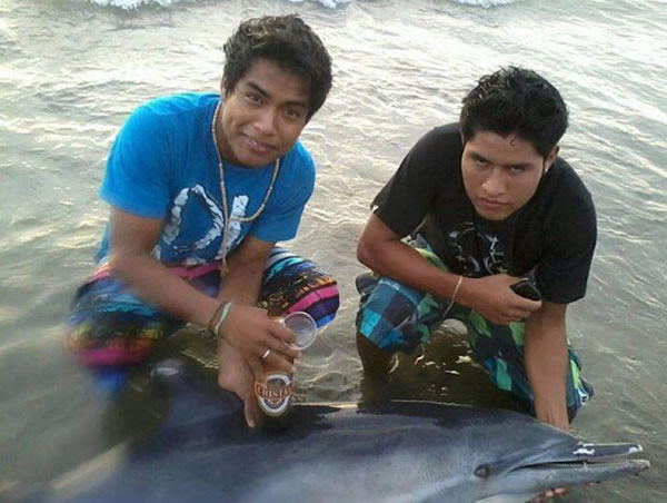 秘鲁少年给奄奄一息的海豚喂啤酒