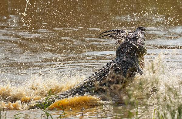 从这张照片中只能看到黑斑羚的角。