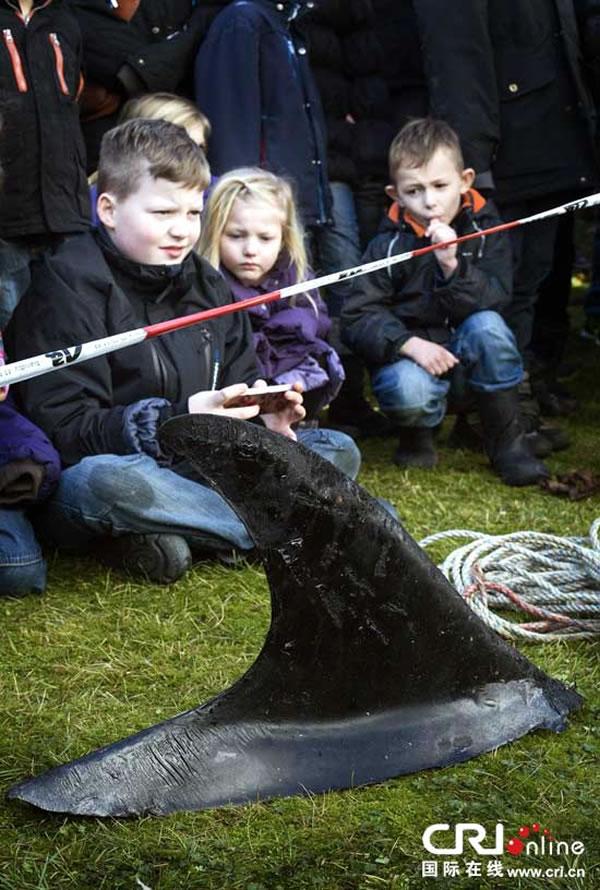 丹麦水族馆公开解剖搁浅海豚