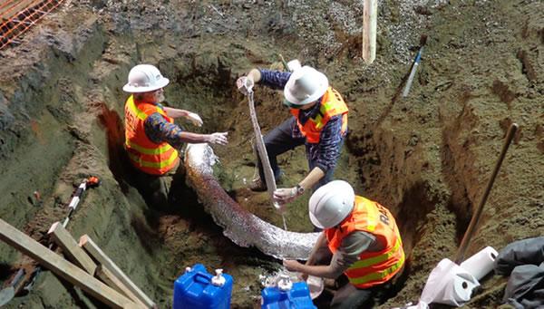 为了保护象牙化石,工作人员使用200多公斤石膏将其包裹起来。