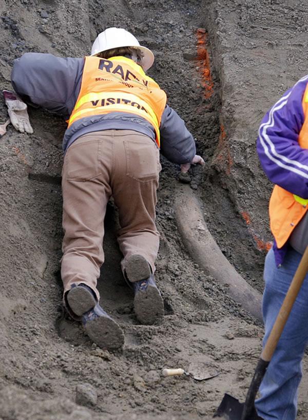 一名古生物学者称,这根象牙的历史在2.2万年到6万年之间。