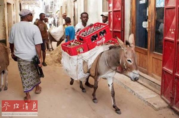 驴是肯尼亚拉穆等地的重要交通工具