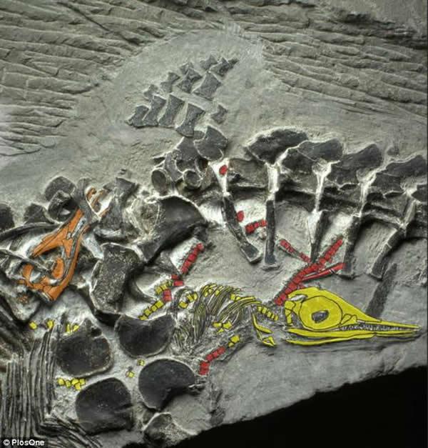 中国安徽发现2.5亿年前处于产仔状态的日本兽人搞基漫画鱼