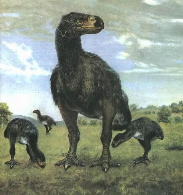 古生物学家发现不飞鸟目是植食性动物