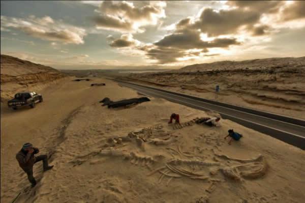 """2011年,智利泛美高速公路的施工人员发现了一个巨大的古代""""鲸鱼墓地""""。"""