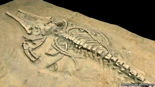 这些骨架化石保存得十分完整,而且鲸类死亡时的姿势也具有明显的共同点,都朝向同一个方向。化石所处的不同海平面高度则证明了在跨越了数千年的时间内发生过四次相似的灾难