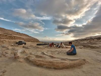 Fossils Reveal First Evidence of Mass Marine Die-Off