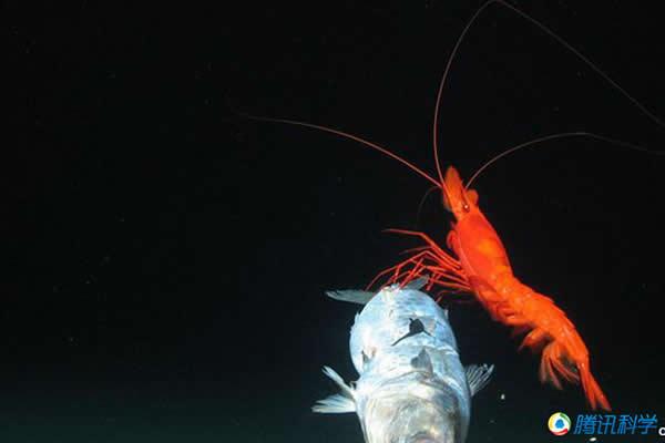 7000米深的海沟各种海洋生物