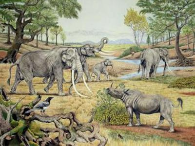 Elephants Landscaped Ice Age Europe Into a Park