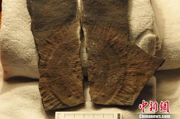 """中国三峡发现典型""""埃迪卡拉生物群"""""""