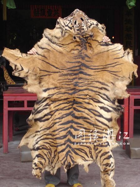 武术馆60多年历史老虎皮诉说一段特殊的虎患历史图片