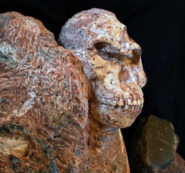"""南非古人类""""小脚""""距今300万年 或为人类"""
