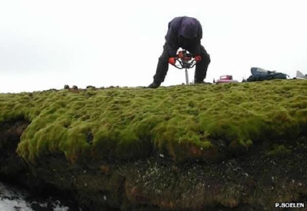 苔藓覆盖的海岸是经过数千年的积累形成的