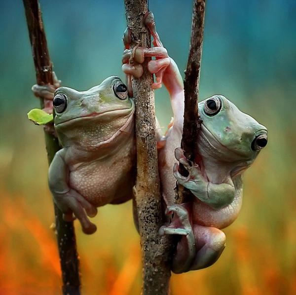 印尼青蛙牵手大晒友谊