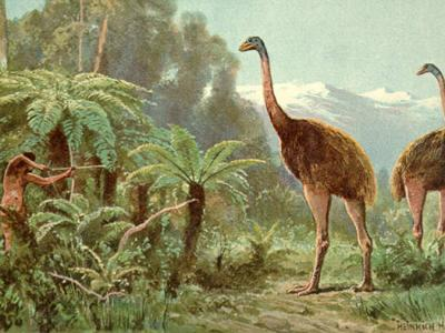 Humans Wiped Out Giant New Zealand Bird
