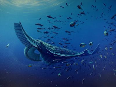 Enormous Shrimp Was Gentle Giant of Cambrian Seas