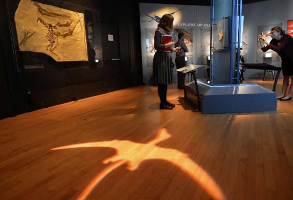 观众在纽约美国自然历史博物馆中参观翼龙化石展品