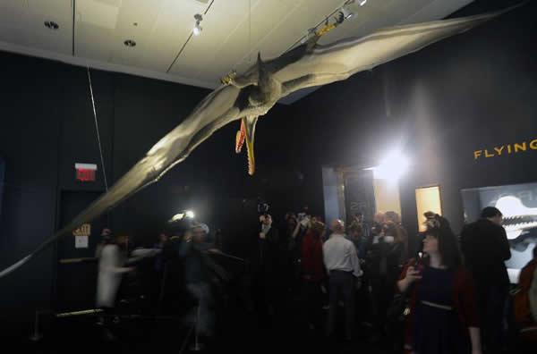 观众在纽约美国自然历史博物馆中参观一件翼龙模型