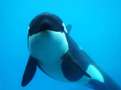 Killer Whales on Valium: Common Practice?