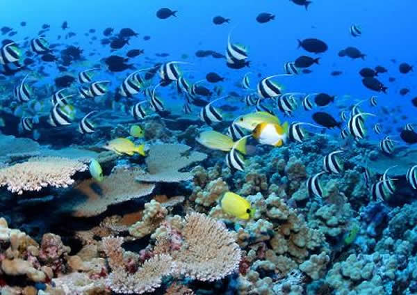 海洋鱼类将因海水酸化失去避开天敌的本能