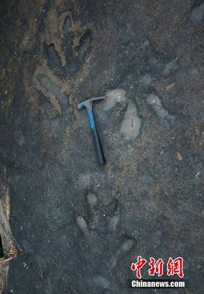 四川攀枝花的手兽足迹化石