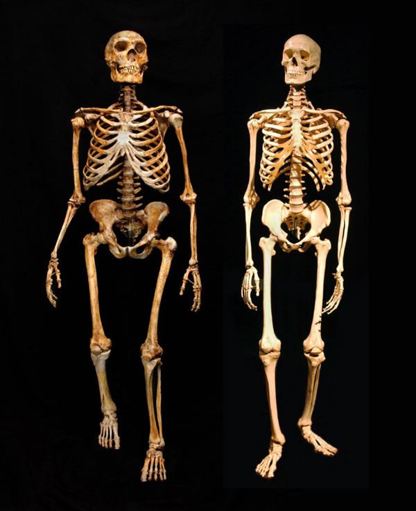 比较远古人类与现代人的甲基化图谱