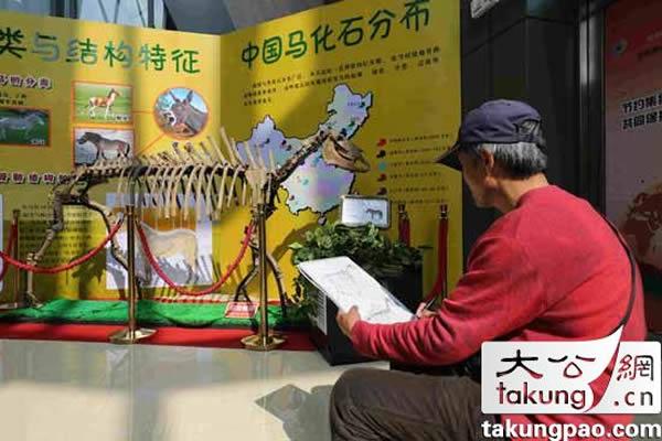 参观者在对产于中国辽宁的普氏野马化石进行速写