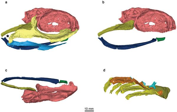 Ozarcus mapesae化石研究发现鲨鱼进化的证据