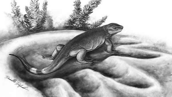 3亿年前小型肉食动物Eocasea与同时代已知最大食草动物的脚印