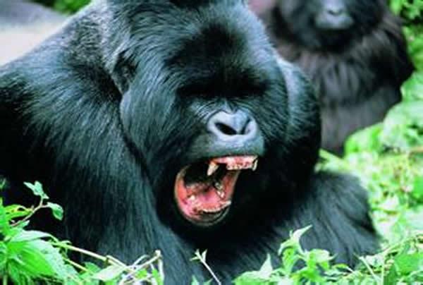 拥有较大大脑的动物具备更强的自控能力