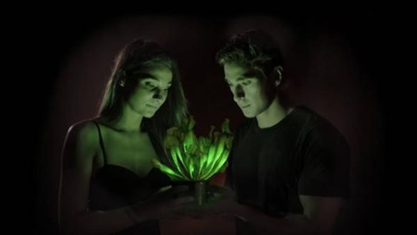 """美国生物科技公司研制出名为""""Starlight Avatar""""的神奇发光植物"""