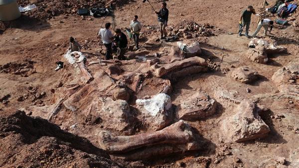 阿根廷丘布特省发现史上最大恐龙化石之后又发现大量其他恐龙化石
