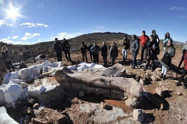 阿根廷发现史上最大恐猎奇qq名字龙化石 白垩纪泰坦