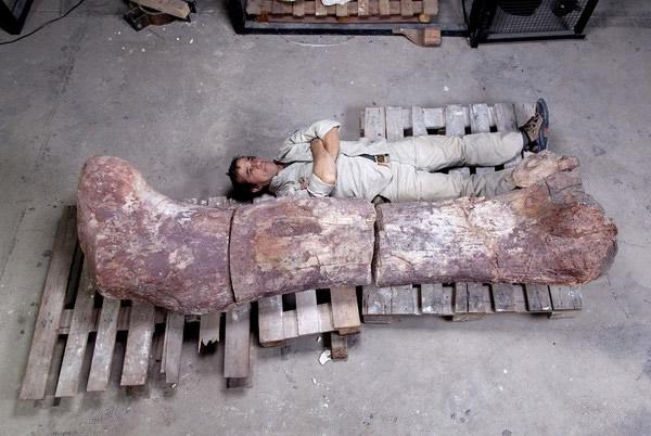阿根廷发现史上最大恐龙化石 白垩纪泰坦巨龙类新物种