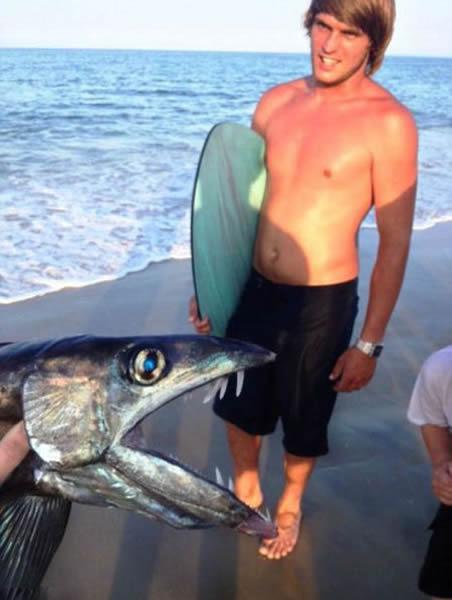 罕见深海帆蜥鱼在美国北卡罗莱纳州海滩现身
