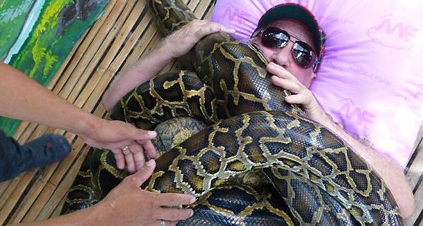 缅甸巨蟒能迅速缠死猎物,因此这种按摩非常危险,胆小者不建议尝试。