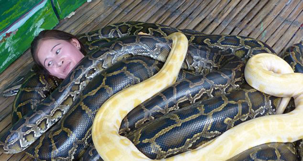 在接受按摩前,游客们会接受短暂指导,比如不要对蛇吹气。