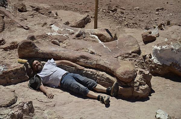 一名研究人员躺在新发现的恐龙化石旁与其比身高。
