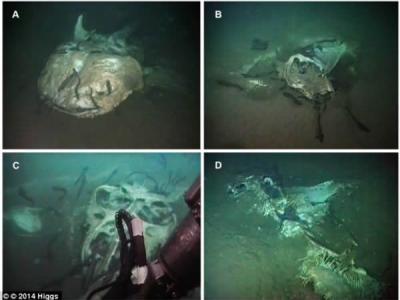 """安哥拉外海海底发现""""深海坟场"""" 四具大型鱼类的尸体躺在海床上"""