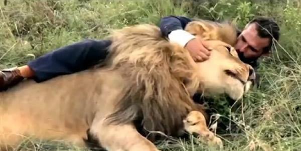 """南非动物园""""狮语者""""与3只狮子踢足球"""