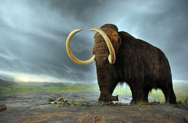 Early Dogs Helped Humans Hunt Mammoths