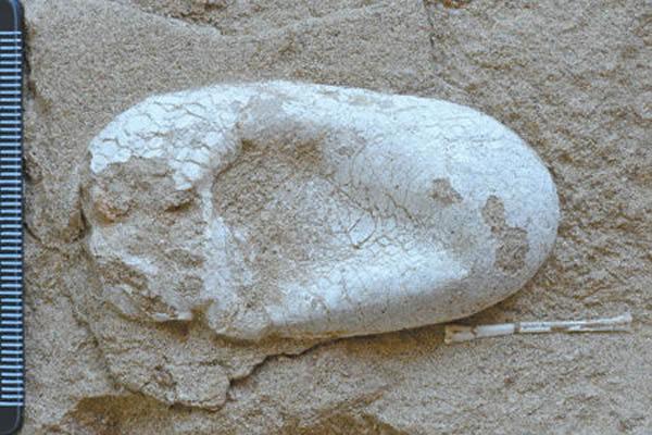 第一枚三维立体保存的翼龙蛋