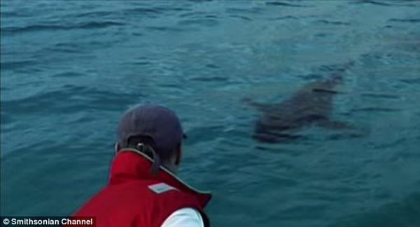 史密森频道纪录片《寻找超级食肉动物》:大白鲨被神秘海洋生物吞噬