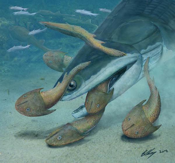 钝齿宏颌鱼(Megamastax amblyodus)复原图(Brian Choo供图)