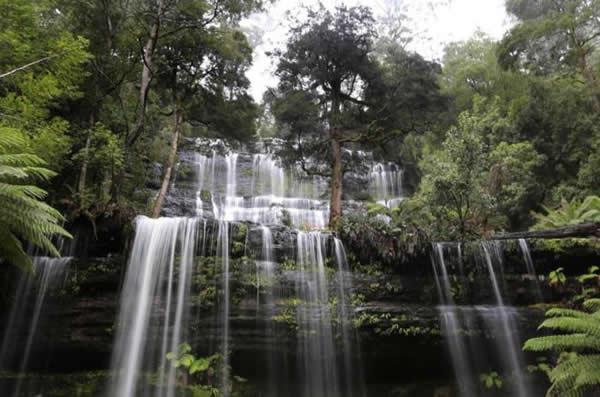 塔斯马尼亚部分林地获接纳为世界遗产