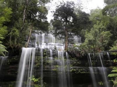 澳洲5千民众集会誓保塔斯马尼亚世界遗产林地